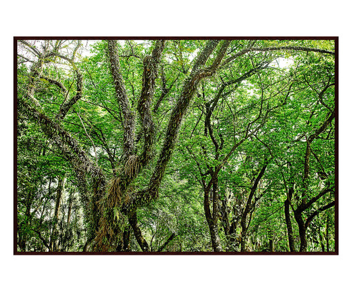 Quadro Save The Forest lV, Verde | WestwingNow