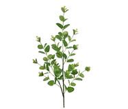 Planta Permanente Buquê Eucalípto - Verde | WestwingNow