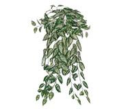 Planta Permanente Folhas Comigo Nínguem Pode | WestwingNow