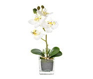 Planta Permanente com Vaso Arranjo Orquídea - Branca | WestwingNow