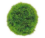 Planta Permanente Arbusto Pine - Verde | WestwingNow