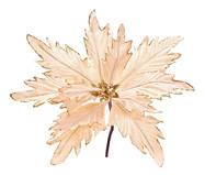 Planta Permanente Decorativa Jepiara | WestwingNow