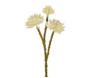 Pick de Flores Permanentes Aloe - Creme | WestwingNow