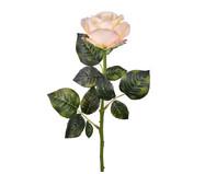 Planta Permanente Haste Rosa Colombiana | WestwingNow
