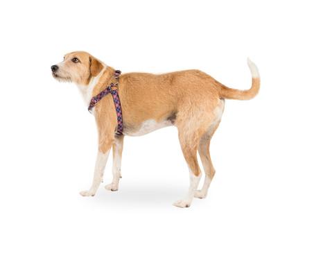 Peitoral para Cachorros London - Azul   WestwingNow