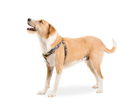 Peitoral para Cachorros New York - Preto | WestwingNow