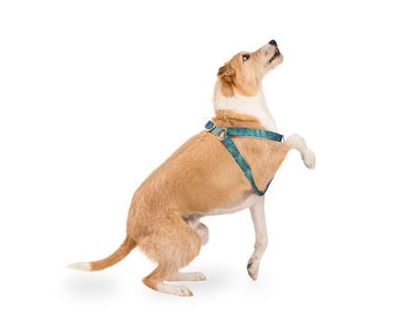 Peitoral para Cachorros Amazônia - Azul | WestwingNow