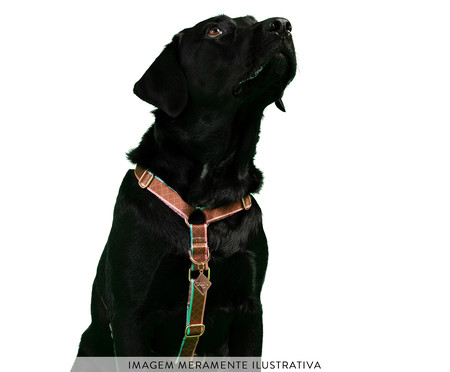 Peitoral Educativo H Slim para Cachorros Paris - Terracota | WestwingNow