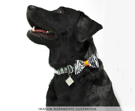 Gravata para Cachorros South Africa - Colorida   WestwingNow