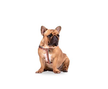 Peitoral para Cachorros Paris - Terracota | WestwingNow
