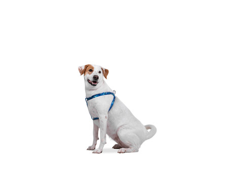Peitoral para Cachorros Hawaii - Azul | WestwingNow