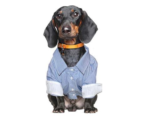 Camisa Social para Cachorros Suit - Azul   WestwingNow