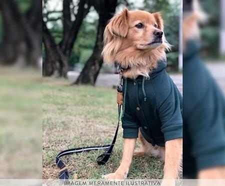 Moletom para Cachorro Helm - Verde   WestwingNow