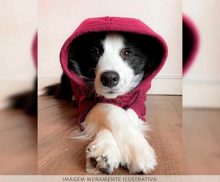 Moletom para Cachorro Helm - Vinho   WestwingNow