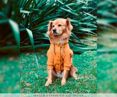 Moletom para Cachorro Helm - Amarelo | WestwingNow