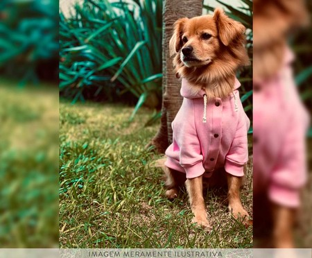 Moletom para Cachorro Helm - Rosa   WestwingNow