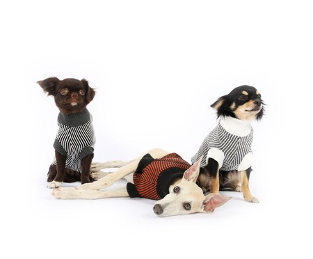 Suéter para Cachorro Minimal - Cinza | WestwingNow