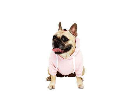 Moletom para Pet Boo - Rosa | WestwingNow