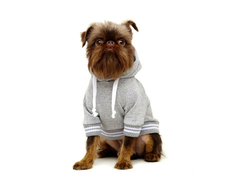 Moletom para Pet Boo - Cinza Mesca | WestwingNow