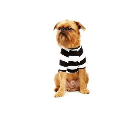 Camiseta para Cachorro Street Stripes - Preta e Branca | WestwingNow