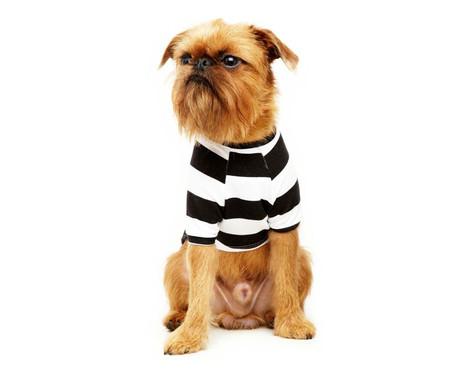Camiseta para Cachorro Street Stripes - Preta e Branca   WestwingNow