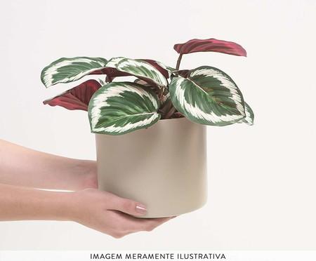Cachepot para Plantas Rossi - Cinza   WestwingNow