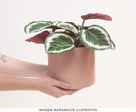 Cachepot para Plantas Rossi - Rosa   WestwingNow