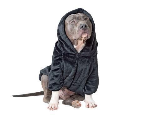 Moletom para Pet em Pelúcia - Preto   WestwingNow