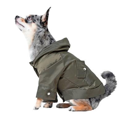 Jaqueta Corta Vento para Pet - Verde   WestwingNow
